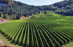 L'Emilia-Romagna investe su qualità dei vini e innovazione: 5,4 milioni per impianti più moderni, vendita diretta ed e-commerce